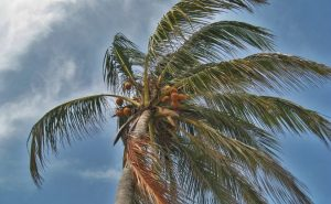 Hurricane Preparation Tips For AC Systems